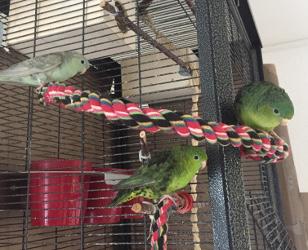 Rosie, Marcellus und Der Schoene
