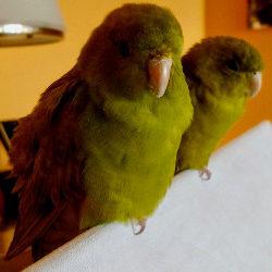 Belli und Hugo