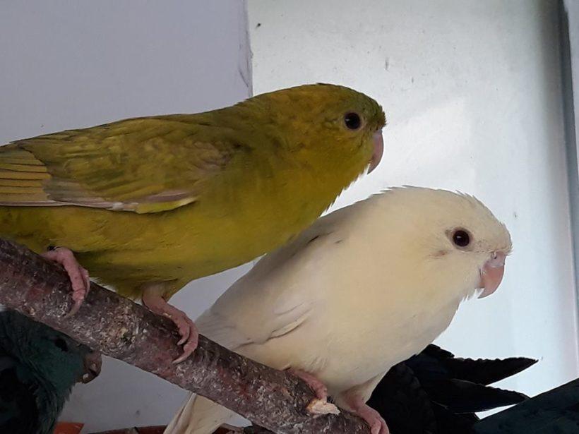 Loewenzahn und Albatros
