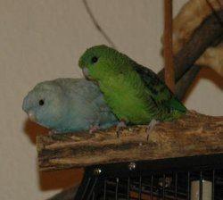 Rocky und Jacky