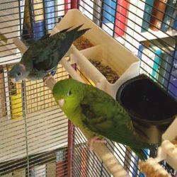 Mausi und Rico