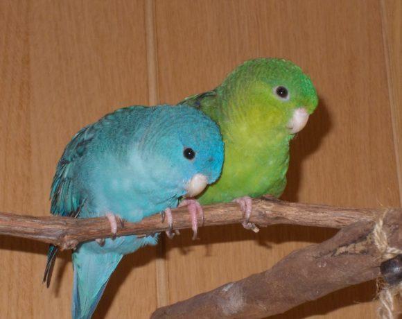 Paro und Kito